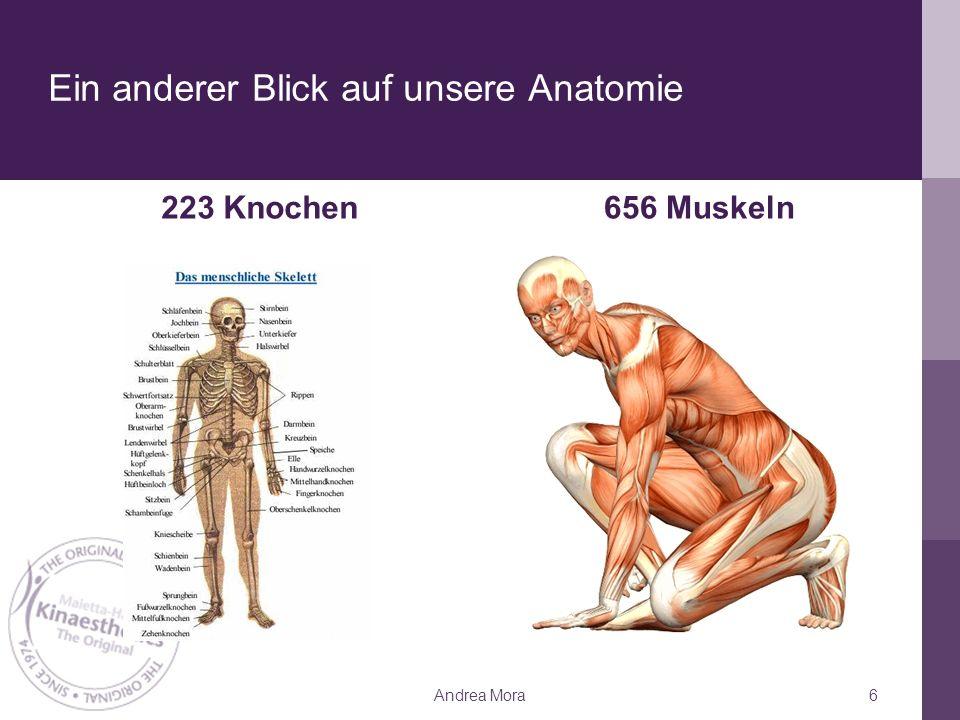 Ein anderer Blick auf unsere Anatomie