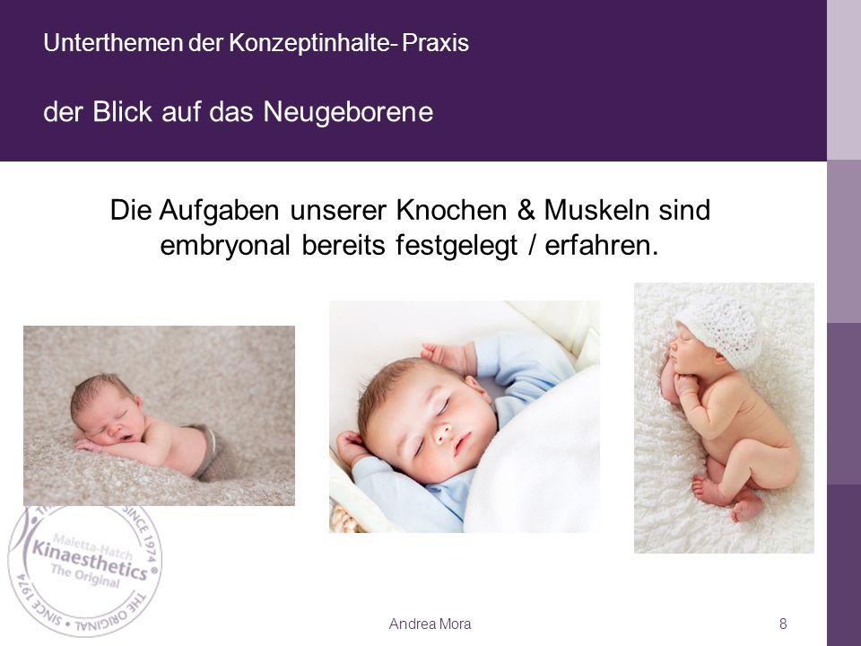 Unterthemen der Konzeptinhalte- Praxis der Blick auf das Neugeborene