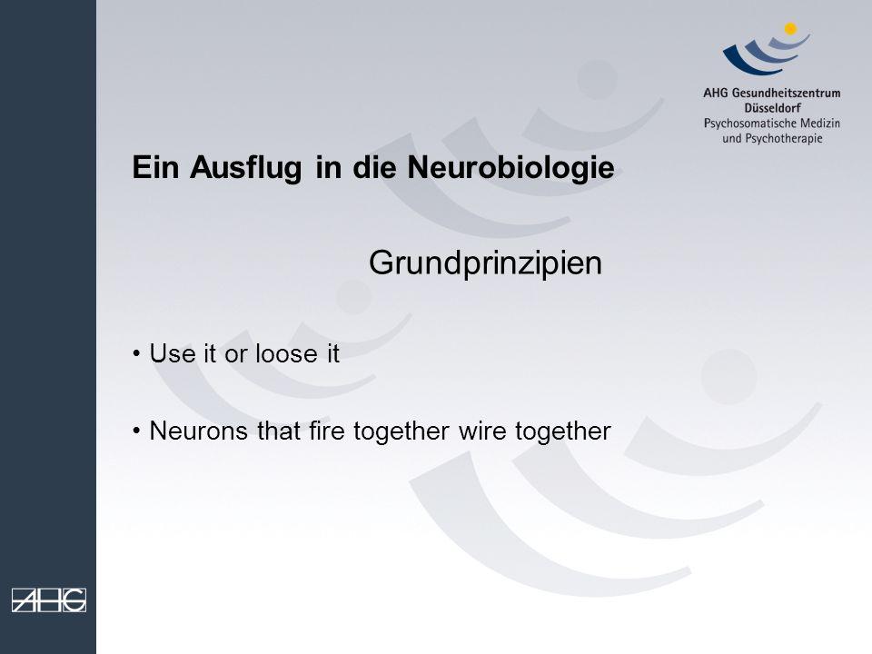 Ein Ausflug in die Neurobiologie