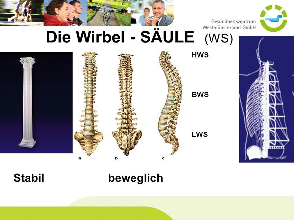 Die Wirbel - SÄULE (WS) HWS BWS LWS Stabil beweglich