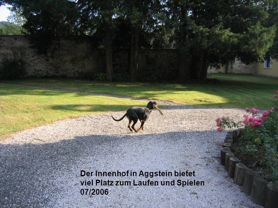 Der Innenhof in Aggstein bietet