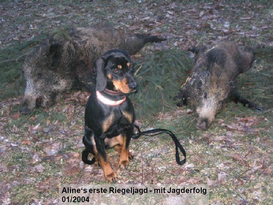 Aline's erste Riegeljagd - mit Jagderfolg
