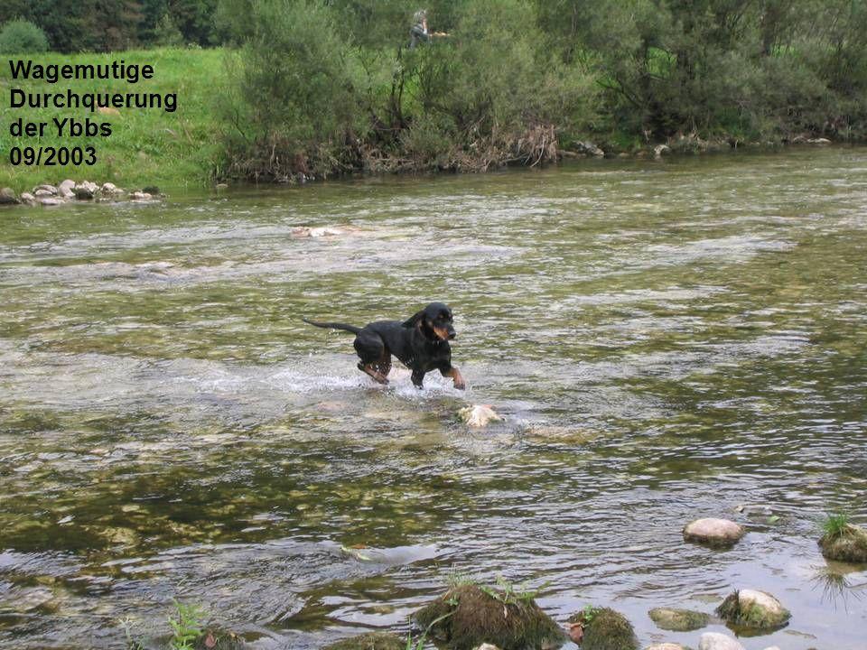 Wagemutige Durchquerung der Ybbs 09/2003