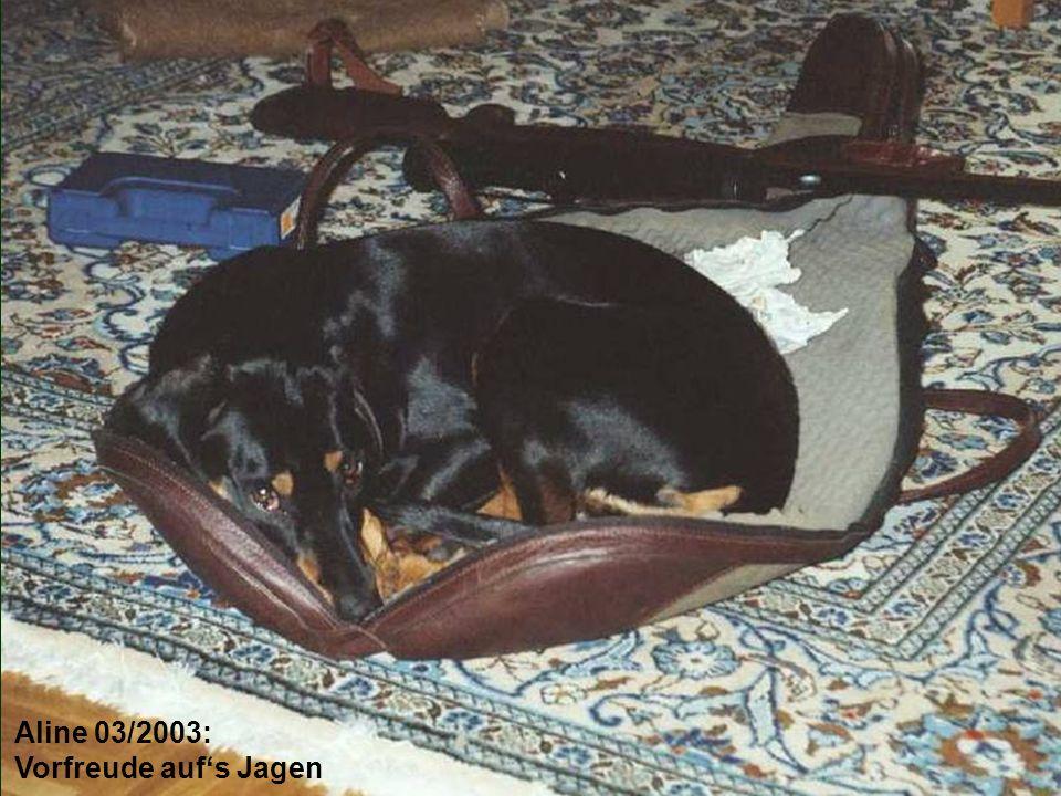 Aline 03/2003: Vorfreude auf's Jagen