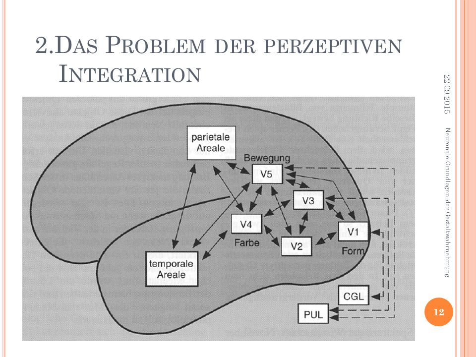 2.Das Problem der perzeptiven Integration
