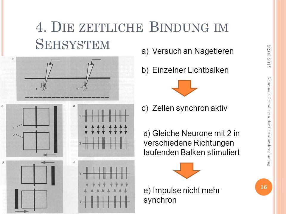 4. Die zeitliche Bindung im Sehsystem