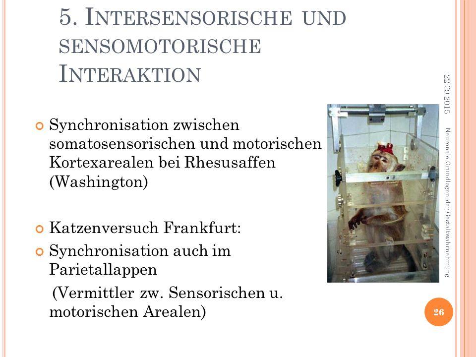 5. Intersensorische und sensomotorische Interaktion