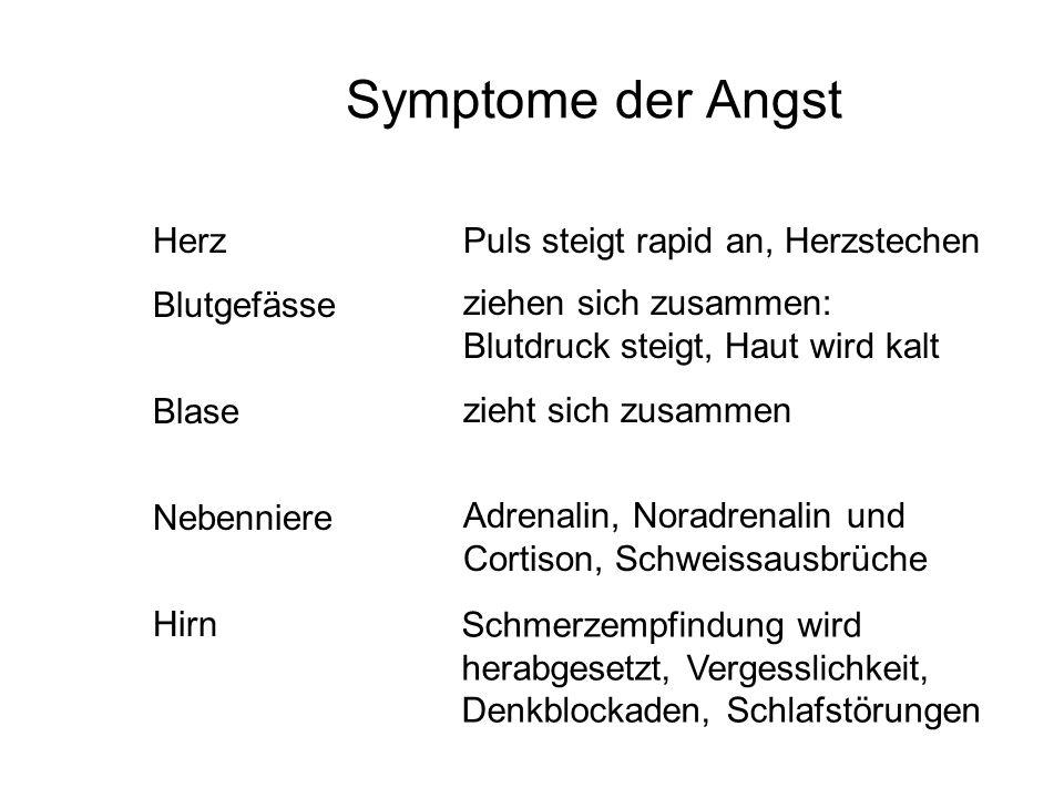 Symptome der Angst Herz Blutgefässe Blase Nebenniere Hirn