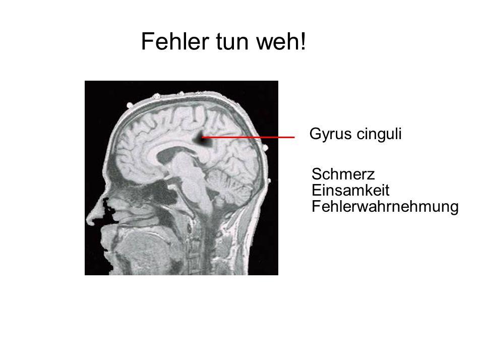 Fehler tun weh! Gyrus cinguli Schmerz Einsamkeit Fehlerwahrnehmung