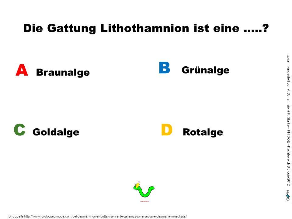 Die Gattung Lithothamnion ist eine …..
