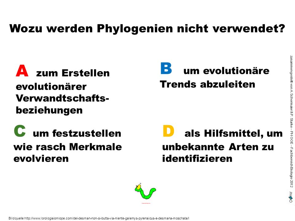 Wozu werden Phylogenien nicht verwendet