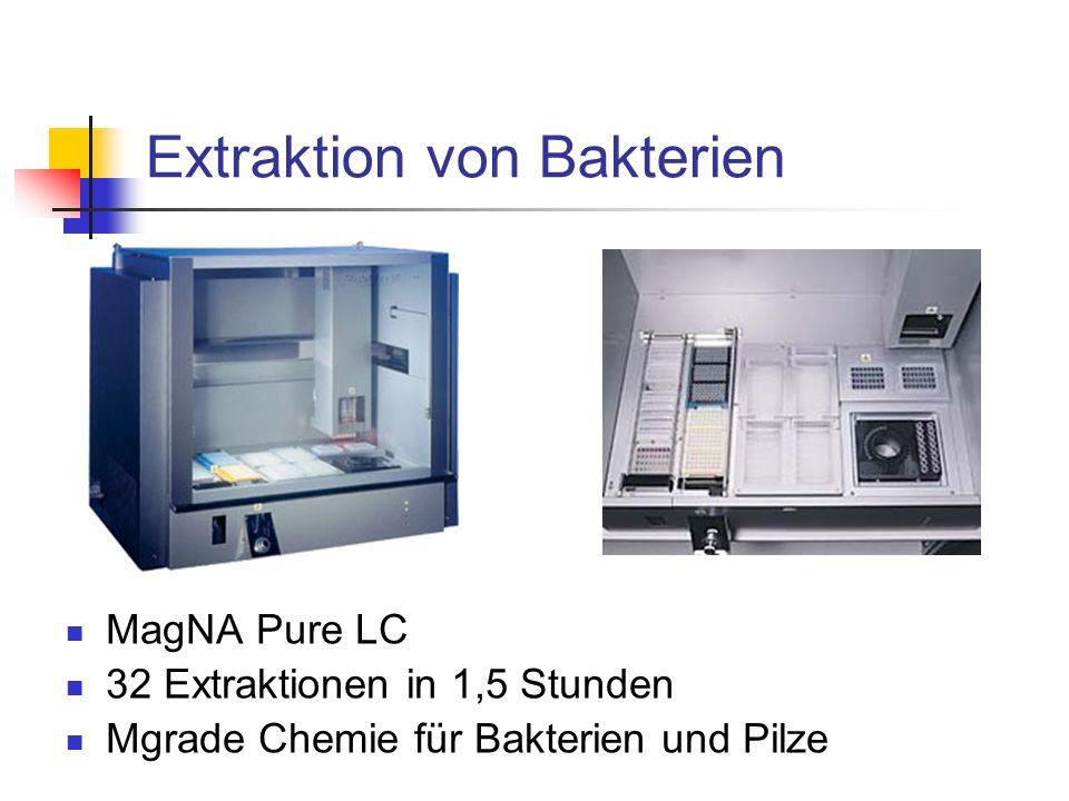 Extraktion von Bakterien