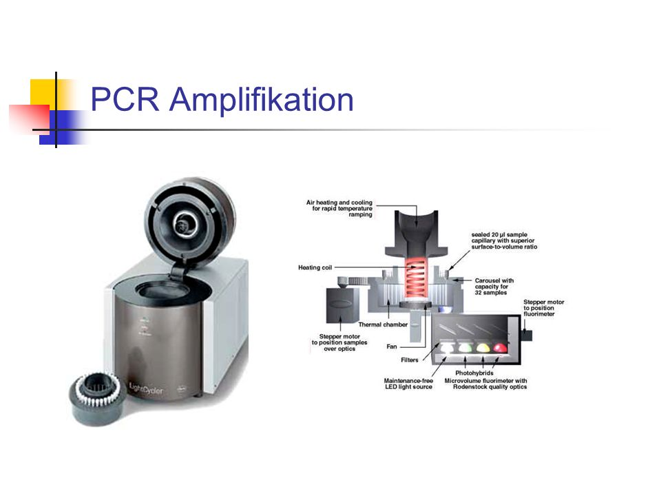 PCR Amplifikation