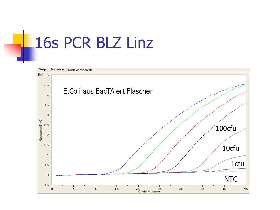 16s PCR BLZ Linz E.Coli aus BacTAlert Flaschen 100cfu 10cfu 1cfu NTC