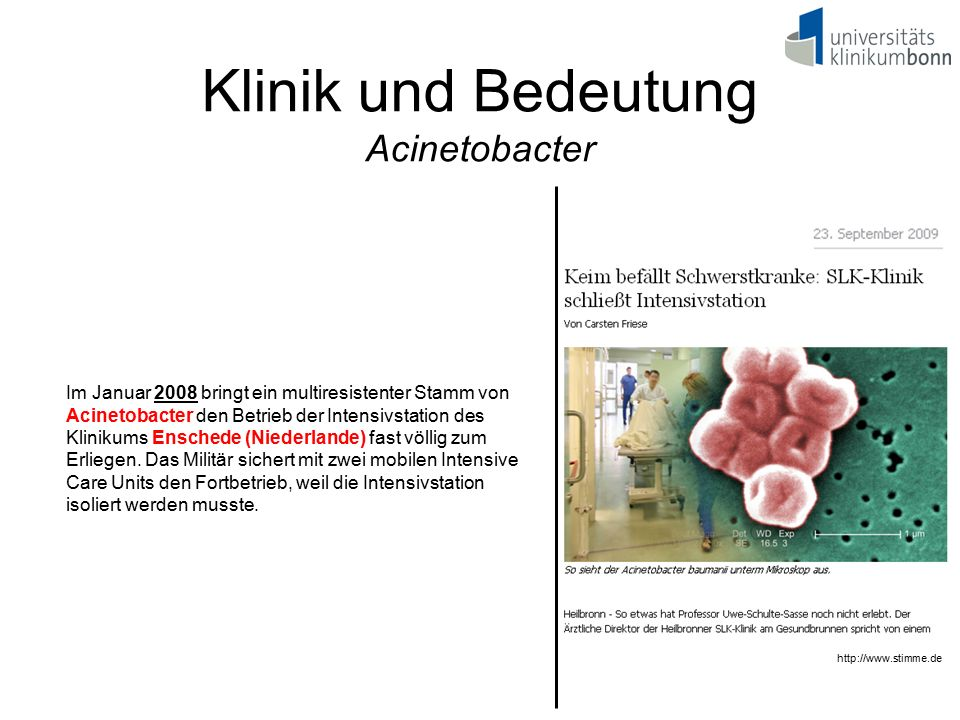 Klinik und Bedeutung Acinetobacter