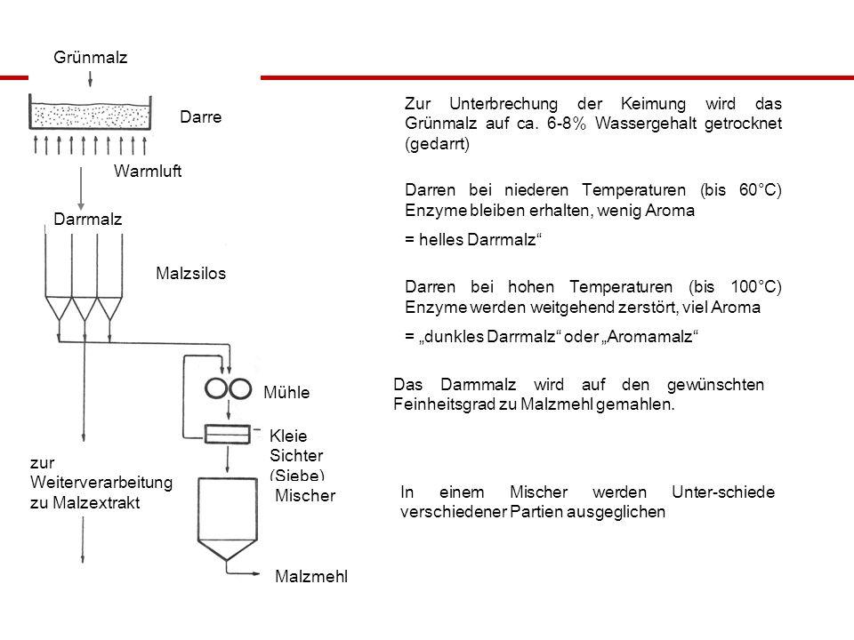 Grünmalz Zur Unterbrechung der Keimung wird das Grünmalz auf ca. 6-8% Wassergehalt getrocknet (gedarrt)