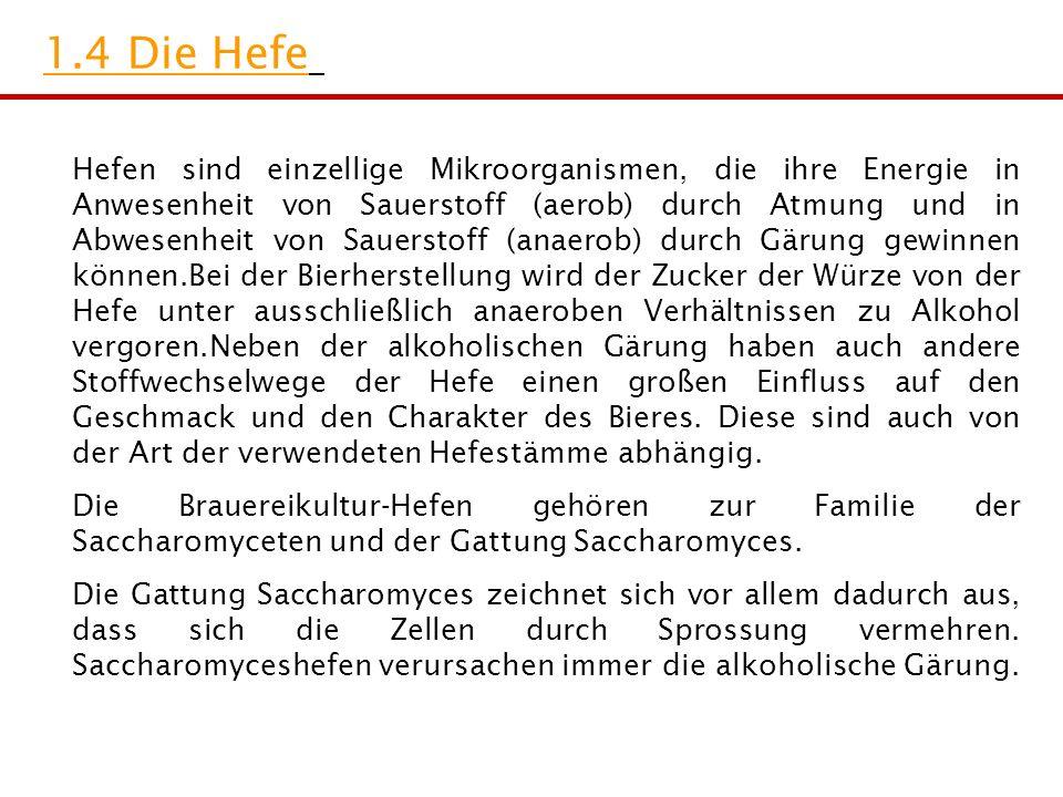 1.4 Die Hefe