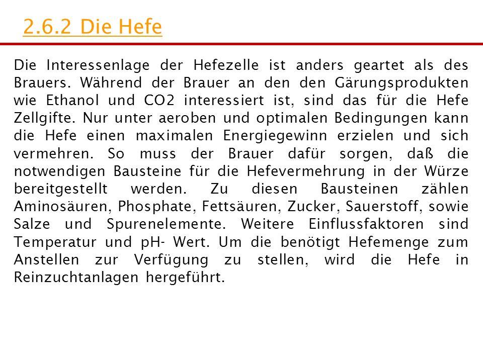 2.6.2 Die Hefe