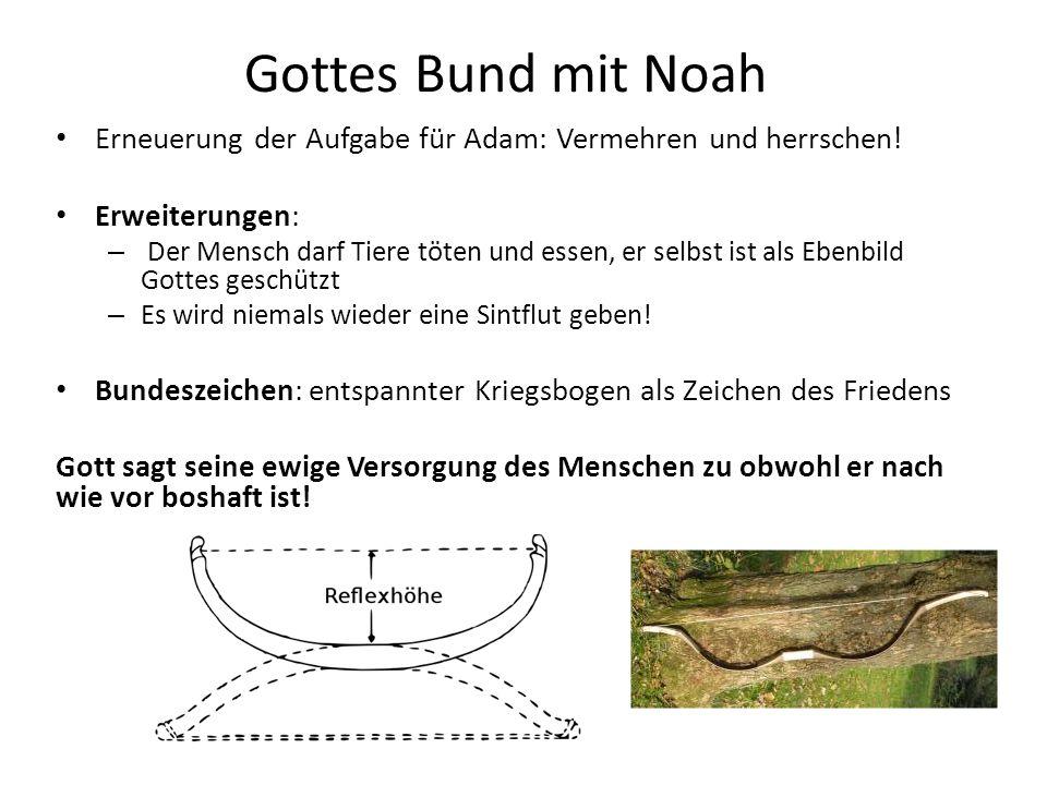 Gottes Bund mit Noah Erneuerung der Aufgabe für Adam: Vermehren und herrschen! Erweiterungen: