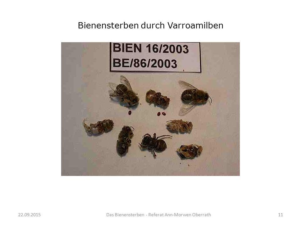 Bienensterben durch Varroamilben
