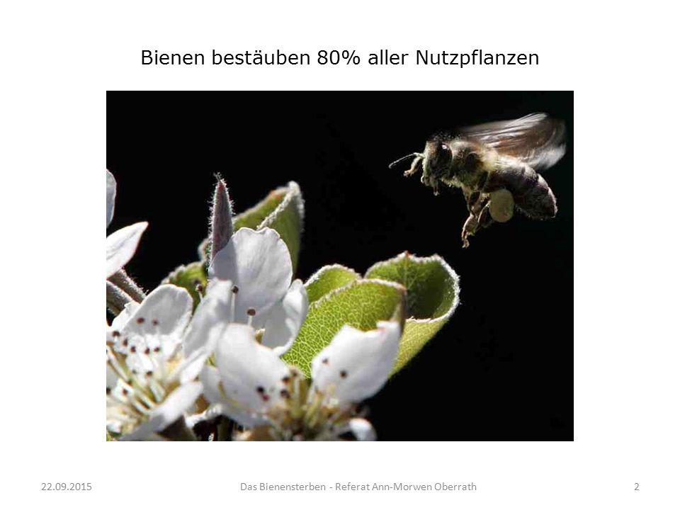 Bienen bestäuben 80% aller Nutzpflanzen