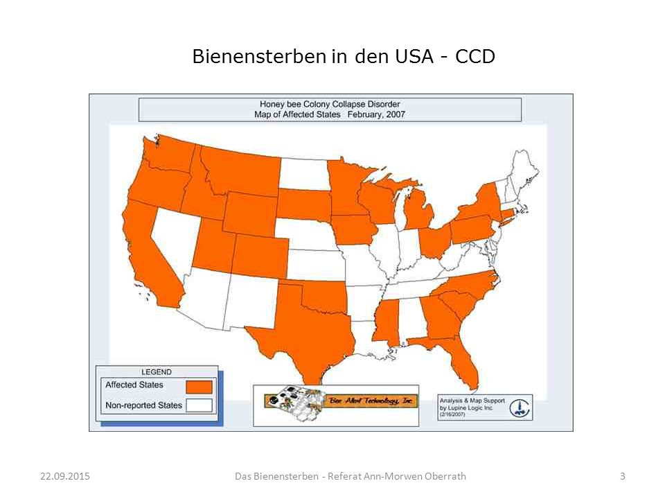 Bienensterben in den USA - CCD