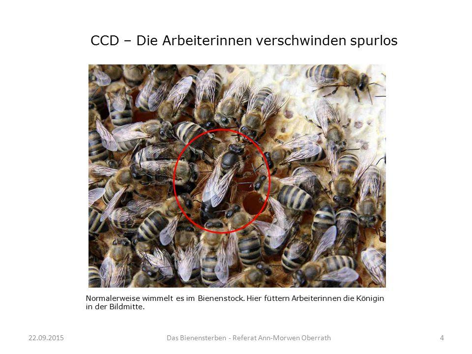 CCD – Die Arbeiterinnen verschwinden spurlos