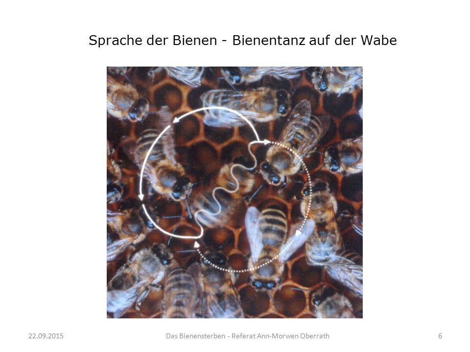 Sprache der Bienen - Bienentanz auf der Wabe