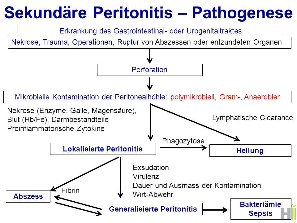 Sekundäre Peritonitis – Pathogenese