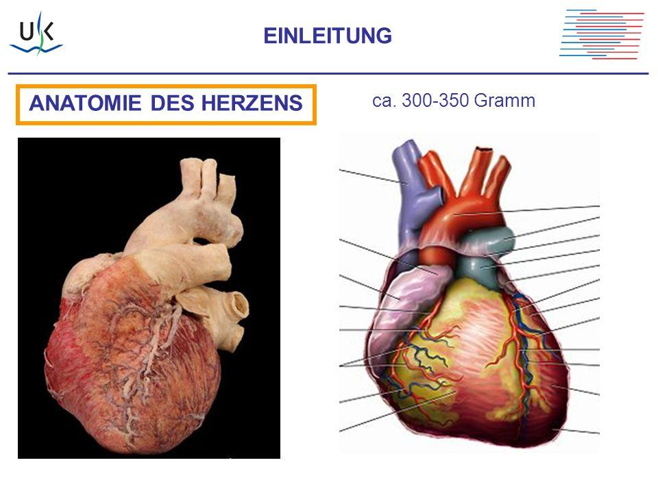 EINLEITUNG ANATOMIE DES HERZENS ca. 300-350 Gramm