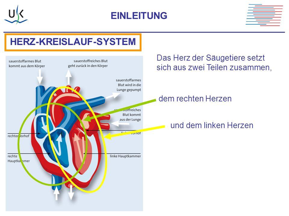 Ungewöhnlich Das Herz Kreislauf System Diagramm Galerie ...