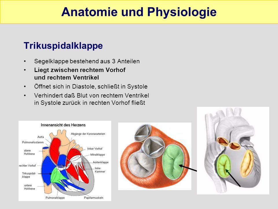 Ausgezeichnet Anatomie Der Blutversorgung Des Herzens Galerie ...