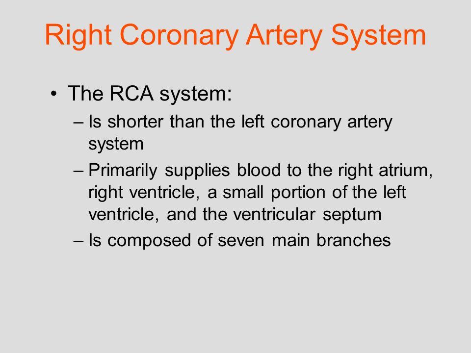 Right Coronary Artery System