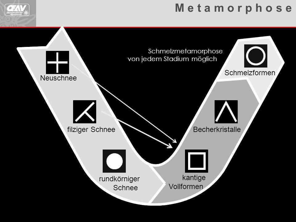 Metamorphosen Übersicht