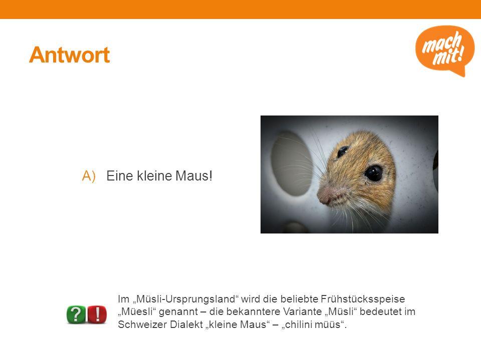 Antwort Eine kleine Maus!