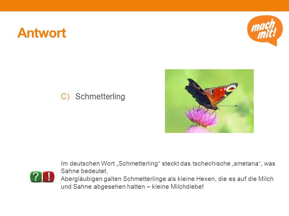 Antwort Schmetterling