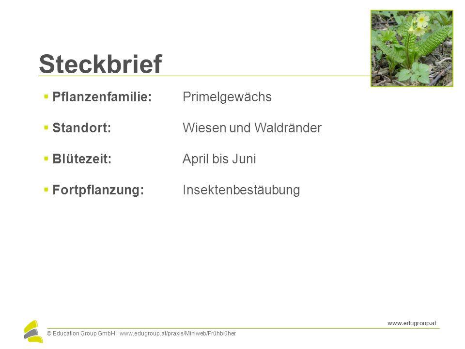 Steckbrief Pflanzenfamilie: Primelgewächs