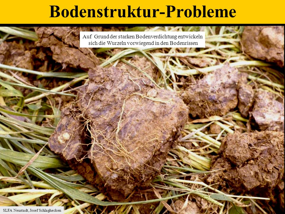 Bodenstruktur-Probleme