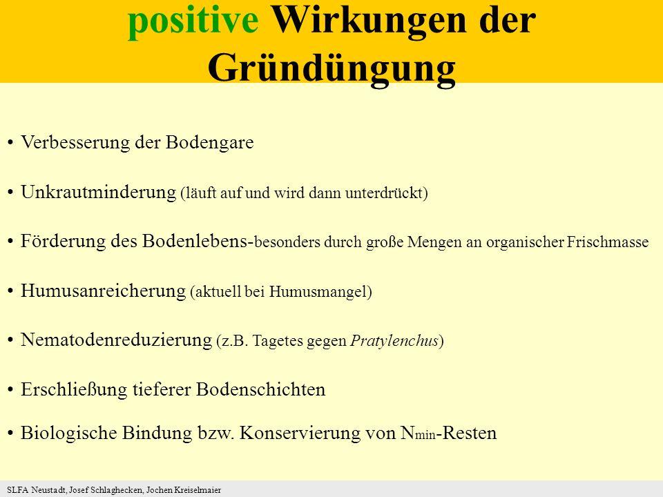 positive Wirkungen der Gründüngung