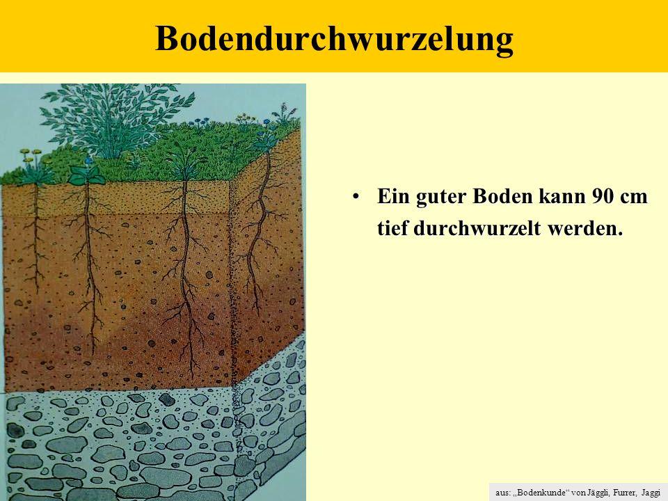 Bodendurchwurzelung Ein guter Boden kann 90 cm