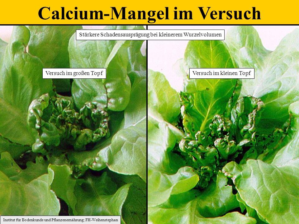 Calcium-Mangel im Versuch