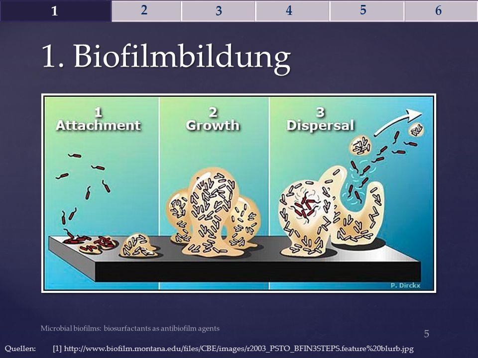 1 2. 3. 4. 5. 6. 1. Biofilmbildung. ----- Besprechungsnotizen (15.07.15 09:36) ----- 1. hefeten sich an (pili, van der Waals)