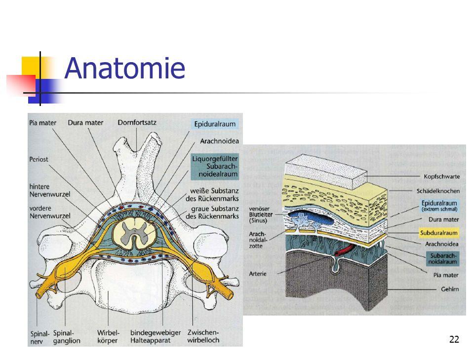 Anatomie 22