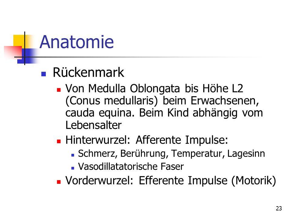 Anatomie Rückenmark. Von Medulla Oblongata bis Höhe L2 (Conus medullaris) beim Erwachsenen, cauda equina. Beim Kind abhängig vom Lebensalter.