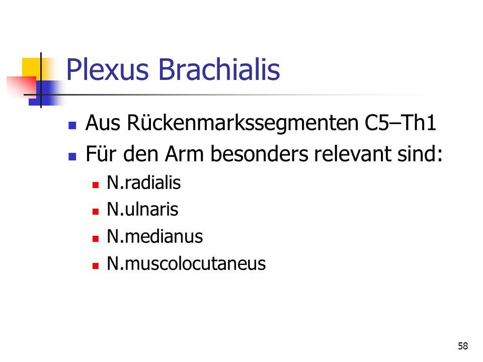 Plexus Brachialis Aus Rückenmarkssegmenten C5–Th1