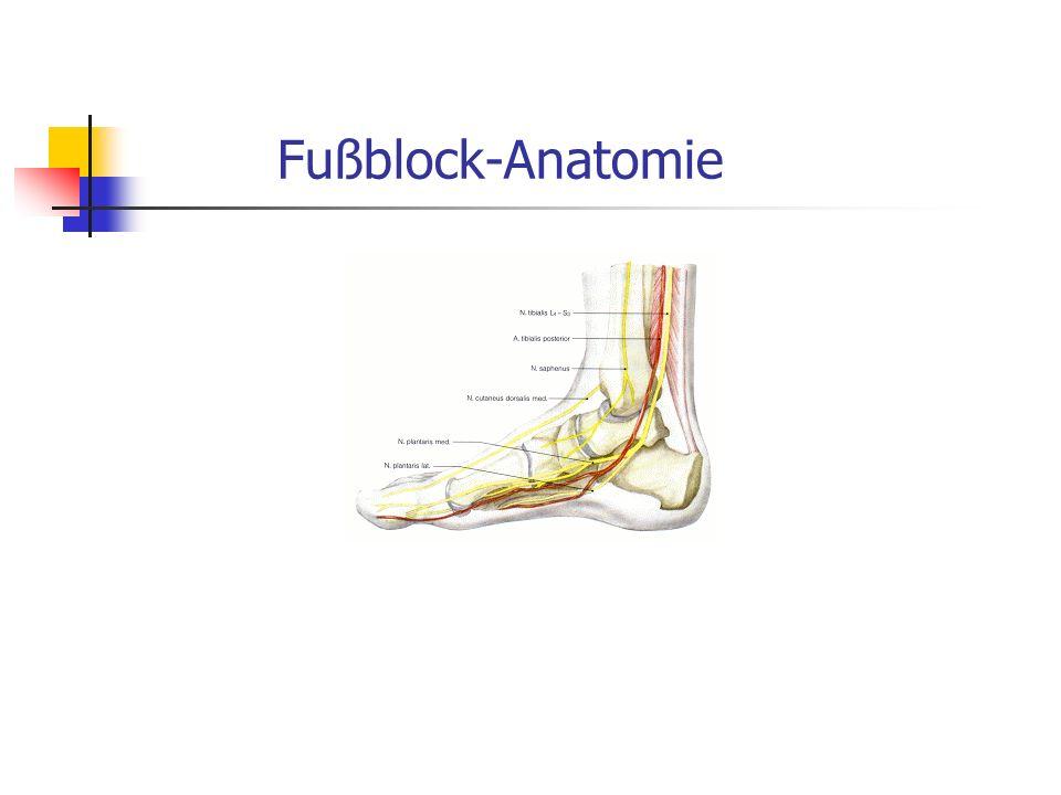Fußblock-Anatomie