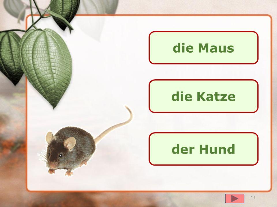 die Maus die Katze der Hund
