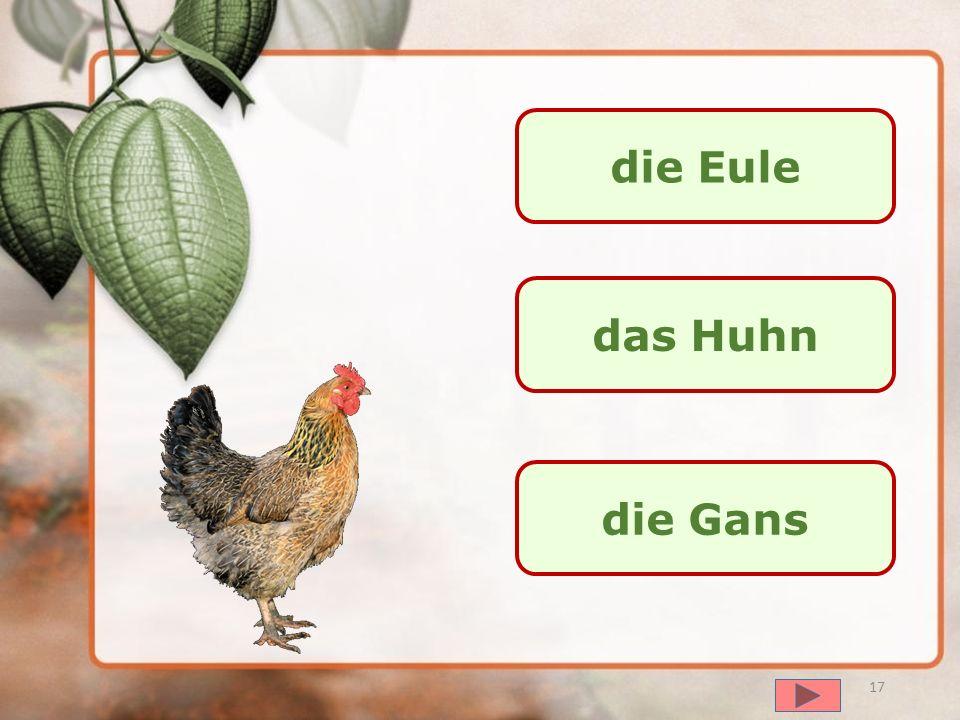 die Eule das Huhn die Gans