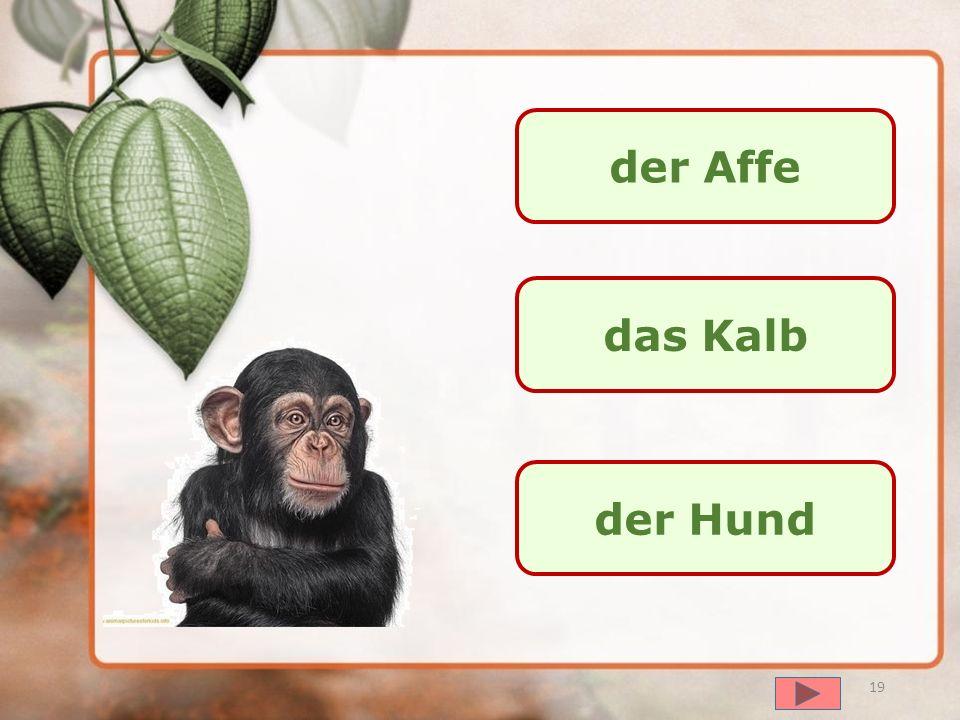 der Affe das Kalb der Hund