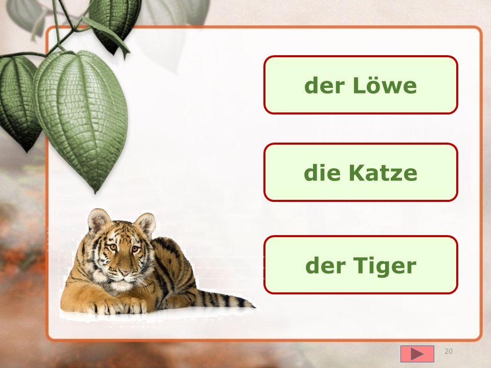 der Löwe die Katze der Tiger
